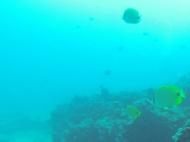 Nautilus Reef 15