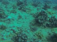 Nautilus Reef 16