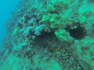 Nautilus Reef 17