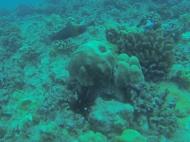 Nautilus Reef 18