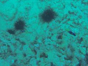 Nautilus Reef 21