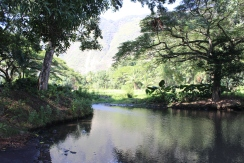 Waipio Valley 12