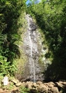 Manoa Falls Family 7