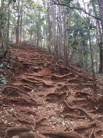 Cardiac Hill