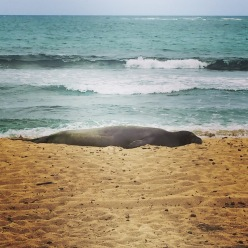 The first of three monk seal sightings.