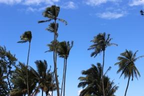 Love palm trees on a blue sky.