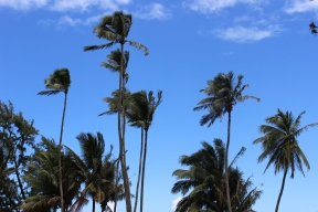 Love palm trees on a blue sky.
