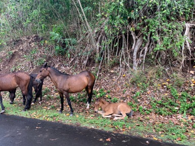 Love this picture of the horses hanging out on the side of the road.
