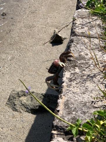 Land crab.